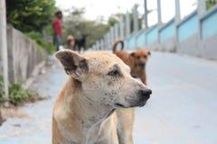 Собака на дороге Стоковые Фото