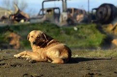 Собака на остатках на термальной весне стоковая фотография rf