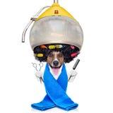 Собака на парикмахерах или groomer Стоковые Фотографии RF