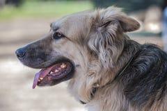 Собака на парке Стоковые Изображения