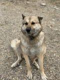 Собака на песке стоковые изображения