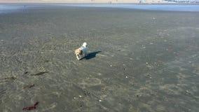 Собака на пляже видеоматериал