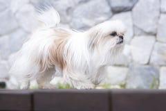 Собака на поле Стоковые Изображения