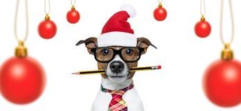 Собака на праздниках рождества стоковое фото