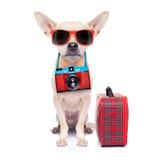 Собака на праздниках Стоковое фото RF