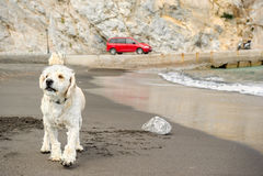 Собака на прогулке морем Стоковая Фотография