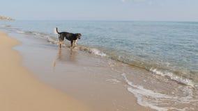Собака на пляже в замедленном движении акции видеоматериалы