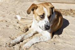 Собака на пляже, покинутом предпринимателе Стоковая Фотография RF