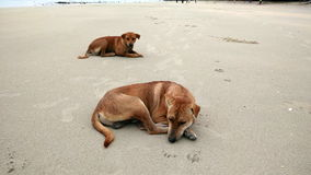 Собака на пляже Таиланда Стоковое Фото