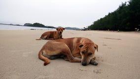 Собака на пляже Таиланда Стоковые Фотографии RF