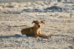 Собака на пляже Стоковые Изображения RF