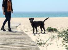 Собака на пляже Стоковое фото RF