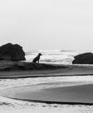 Собака на пляже Стоковое Изображение
