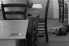 Собака на ресторане Стоковые Изображения
