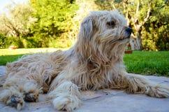 Собака на саде Стоковое Изображение RF