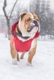 Собака на снежке Стоковое фото RF
