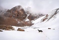 Собака на снежном озере горы Стоковая Фотография RF