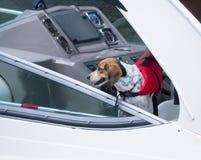 Собака на спасательном жалете шлюпки Стоковая Фотография RF