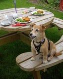 Собака на стенде пикника с плитами обеда стоковые изображения