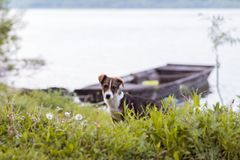 Собака на стороне реки стоковые изображения