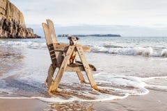 Собака на стуле смотря вне к морю Стоковые Изображения