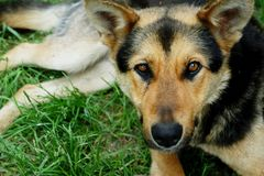 Собака на траве стоковые изображения