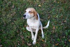 Собака на луге Стоковая Фотография RF