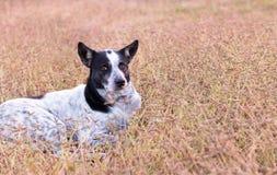 Собака на луге Стоковые Фото