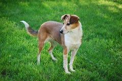 Собака на лужайке стоковое фото rf