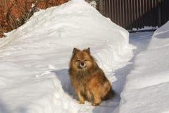 Собака на улице Лучший друг ` s человека Прогулки в природе Красивейшее животное Стоковое Изображение