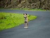 Собака на улице, смотря прочь стоковая фотография