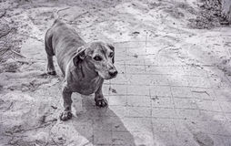 Собака на улице Стоковые Фотографии RF