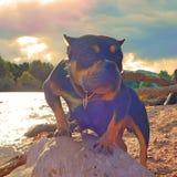 Собака на The Creek Стоковые Фото