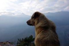 Собака на Kalpa стоковая фотография rf