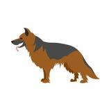 Собака немецкого чабана Стоковое Изображение RF