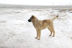 Собака немецкой овчарки почти решетка Стоковое фото RF