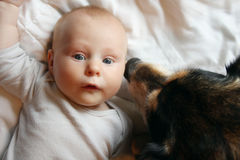 Собака немецкой овчарки любимчика целуя Newborn младенца стоковые изображения