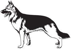 Собака немецкой овчарки Стоковые Фотографии RF
