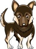 Собака немецкой овчарки Стоковая Фотография