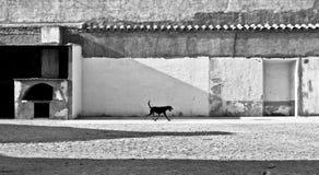 собака немногая гуляя стоковая фотография rf