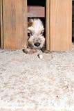 собака немногая шаловливое Стоковое Фото