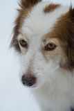 собака немногая Стоковая Фотография