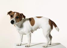 собака немногая Стоковое фото RF