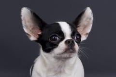 собака немногая Стоковое Изображение RF