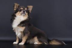 собака немногая Стоковые Изображения