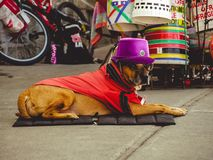 Собака нося шляпу и стекла стоковое изображение rf