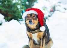 Собака нося шляпу Санты стоковая фотография
