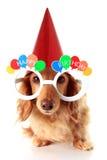 собака дня рождения счастливая стоковое фото