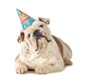 Собака дня рождения стоковое фото