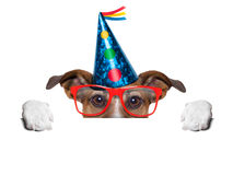 Собака дня рождения Стоковое фото RF
